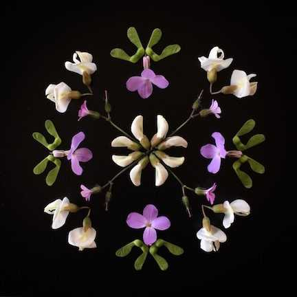 Artistic display of flowers