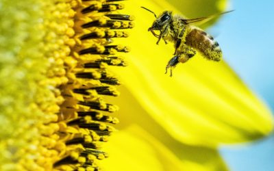 Attracting Pollinators to Your Garden : A Virtual Program presented by Cornell Cooperative Extension Master Gardener